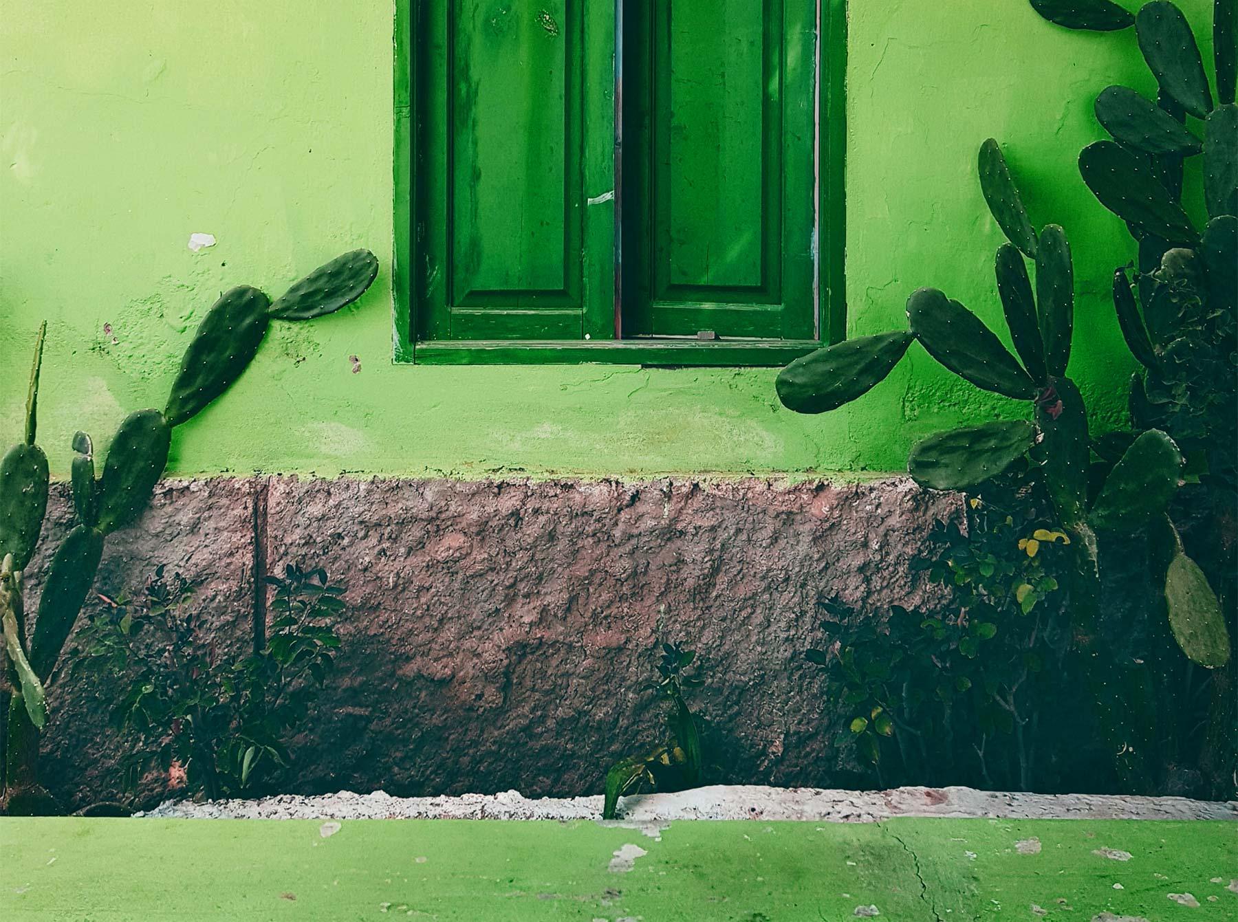 sfeerbeeld van een groene muur met planten er voor